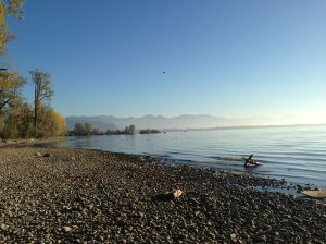 Autumn at the Lake of Constance
