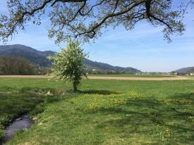 beautiful spring in the Dreisam valley